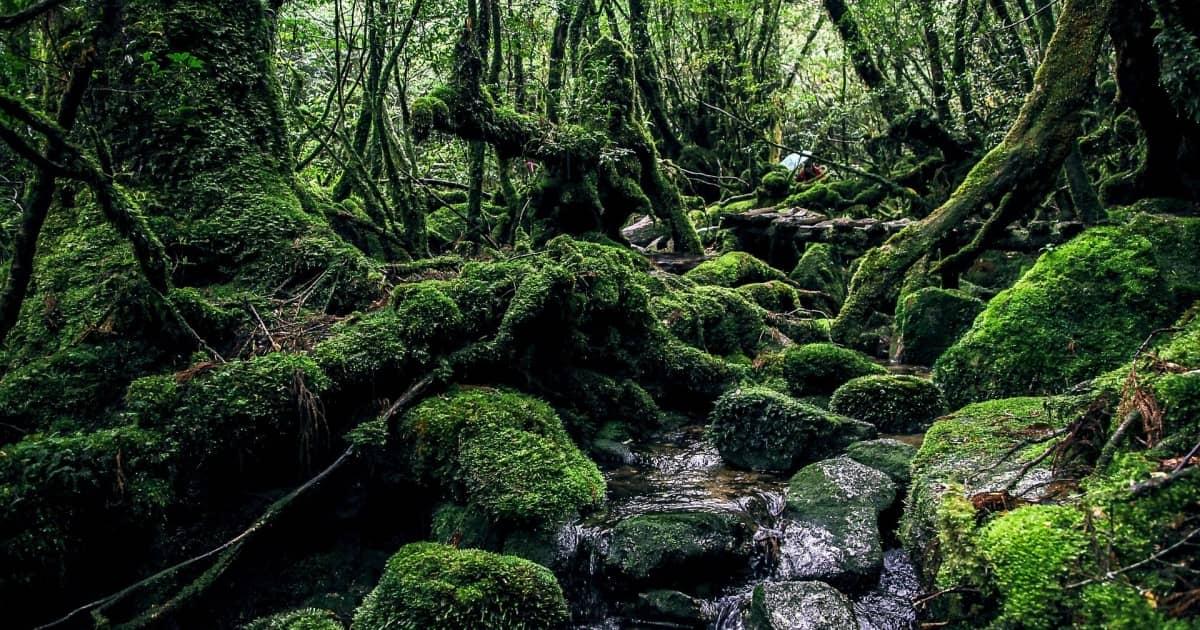 日本で登録されている世界自然遺産
