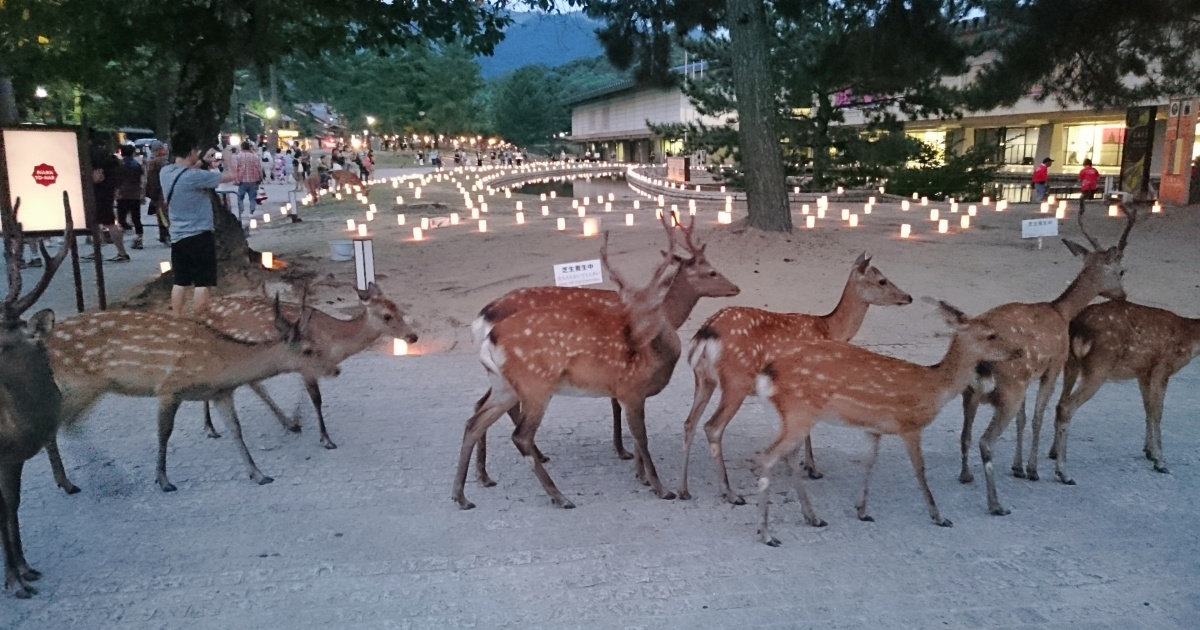 奈良公園、奈良国立博物館